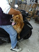 口愛的喵狗:居然塞的進去 他超大隻的說 0.0