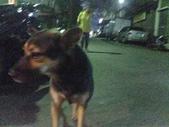 口愛的喵狗:中秋節烤肉的時候他一直可愛可憐的在我們旁邊,可是一直動來動去的