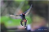 未分類相簿:download.jpg鳥3.jpg