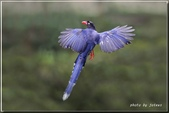 未分類相簿:download.jpg鳥4.jpg