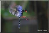 未分類相簿:download.jpg鳥5.jpg