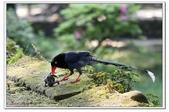 未分類相簿:download.jpg鳥6.jpg