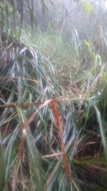 DSC_1192.JPG - 20150926~0927 颱風追 芒草高的平元林道獵寮兩天行   原本是寒溪-大元國小南澳北溪上翠