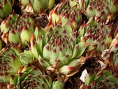多肉植物:1755641998.jpg
