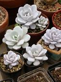 多肉植物:1755642039.jpg