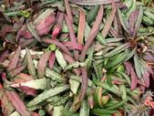 多肉植物:1755642046.jpg