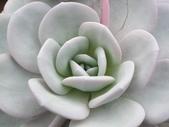 多肉植物:1755642009.jpg