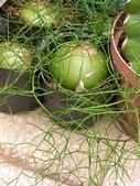 多肉植物:1755642034.jpg
