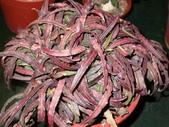 多肉植物:1755642051.jpg
