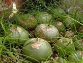多肉植物:1755642038.jpg