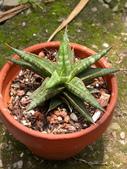 多肉植物:1755642053.jpg