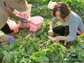 旗山-美濃-六龜:白玉蘿蔔