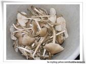 雷公菇:2009年雷公菇