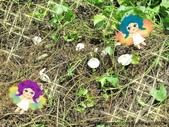 雷公菇:雷公菇尋寶記