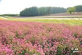 富田農場:IMG_5551.JPG