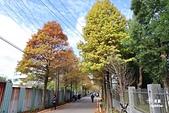 大溪落羽松:IMG_0818.JPG