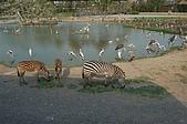 泰國五日行:野生動物園