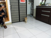 ♥ 『超級無敵可愛』の寶貝貝游喵咪。每天悠悠哉哉碰碰跳跳只要我幫牠到飼料換貓砂,真好命!:1765561472.jpg