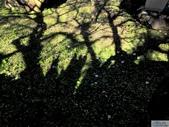 2013.01;南投風櫃斗&新中横遊拍:DSC00018.jpg