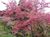 2013.03.14;重訪阿里山樱花行:DSC03737.JPG