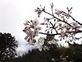 2013.03.14;重訪阿里山樱花行:DSC03738.JPG