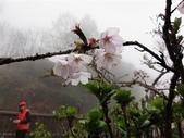 2013.03.14;重訪阿里山樱花行:DSC03739.JPG