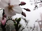 2013.03.14;重訪阿里山樱花行:DSC03743.JPG