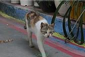 2010-06-07 再訪彩繪街外拍:台中-彩繪之旅外拍089.JPG