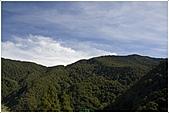 2010-07-04 拉拉山二日遊---拉拉山神木群:拉拉神木群003.jpg