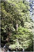 2010-07-04 拉拉山二日遊---拉拉山神木群:拉拉神木群-03號及04號.jpg