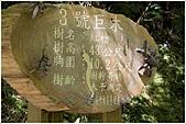 2010-07-04 拉拉山二日遊---拉拉山神木群:拉拉神木群-03號-1.jpg