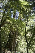 2010-07-04 拉拉山二日遊---拉拉山神木群:拉拉神木群-05號-3.jpg