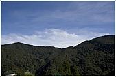 2010-07-04 拉拉山二日遊---拉拉山神木群:拉拉神木群004.jpg