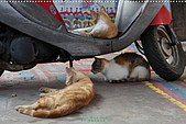 2010-06-07 再訪彩繪街外拍:台中-彩繪之旅外拍098.JPG