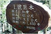 2010-07-04 拉拉山二日遊---拉拉山神木群:拉拉神木群-01號-1.jpg