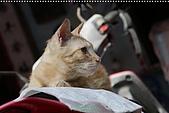 2010-06-07 再訪彩繪街外拍:台中-彩繪之旅外拍105.JPG