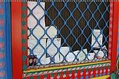 2010-06-07 再訪彩繪街外拍:台中-彩繪之旅外拍019.JPG