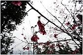 2011-02-13 鹿谷溪頭:鹿谷溪頭014.jpg