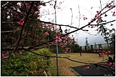 2011-02-13 鹿谷溪頭:鹿谷溪頭015.jpg