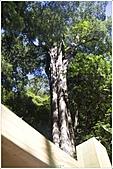 2010-07-04 拉拉山二日遊---拉拉山神木群:拉拉神木群-04號-2.jpg