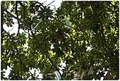 2010-08-01 The One 南園人文休閒客棧-景觀篇:The One 南園人文休閒客棧-景觀篇013.jpg