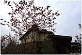 2011-02-13 鹿谷溪頭:鹿谷溪頭003.jpg