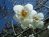 2010-01-17 烏松崙賞梅:DSCF5056.JPG