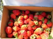 採草莓:1350640623.jpg