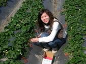 採草莓:1350640625.jpg