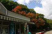 日本函館東北賞楓(三):賣店邊的楓樹
