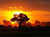 驚艷的非洲:夕陽下的大象,非洲中部