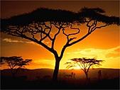驚艷的非洲:日出,坦桑尼亞