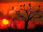 驚艷的非洲:日落,贊比亞