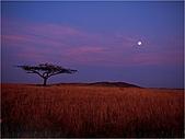 驚艷的非洲:判斷錯誤的鬣狗